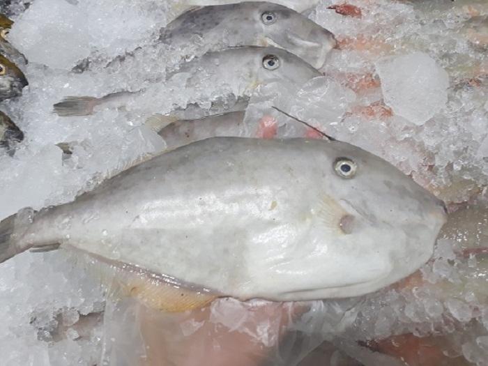 Cá bò hay còn gọi là ca da bò, đặc sản vùng biển miền Trung và Nam nước ta